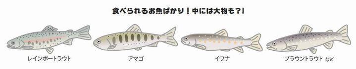 魚の種類の説明